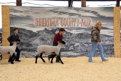 Junior Sheep Showmanship Class 2