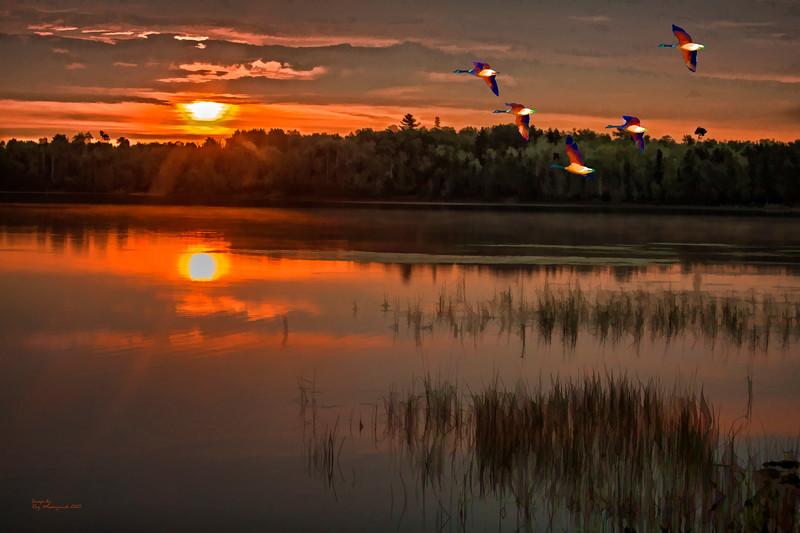 """One Pine Fall Sunrise"""