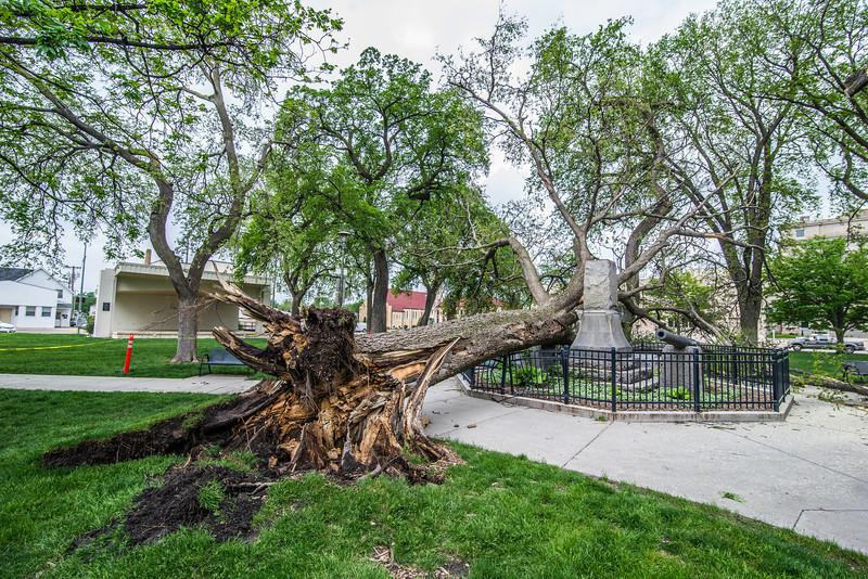 5-19-13 Tree Go Boom