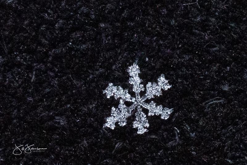 snowflakes-1403.jpg