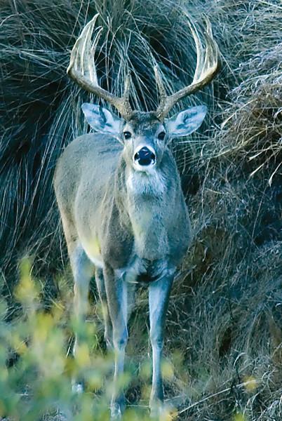 2005 Deer Lease