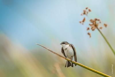San Joaquin Wildlife Preserve Birds