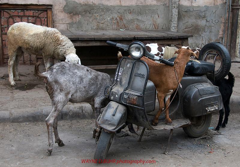 INDIA2010-0128A-467A.jpg