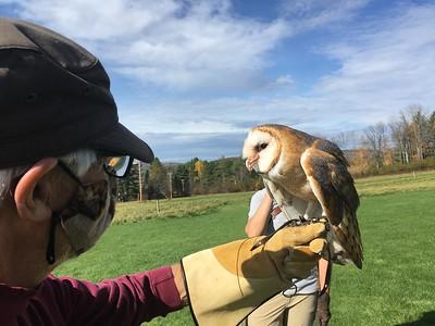 Falcon Adventure