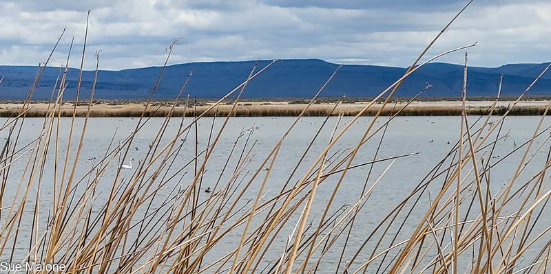05-19-2021 Summer Lake Wildlife Refuge-50.jpg