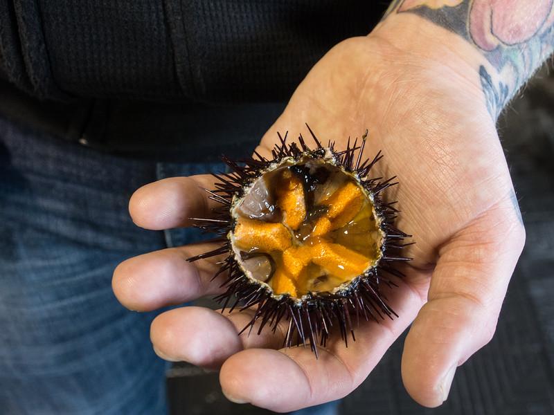savelletri sea urchin in hand.jpg