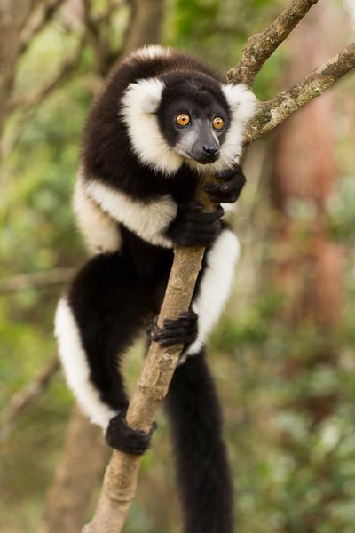 Madagascar_2013_IG3A2720.jpg