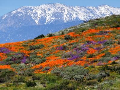 Diamond Valley Lake California