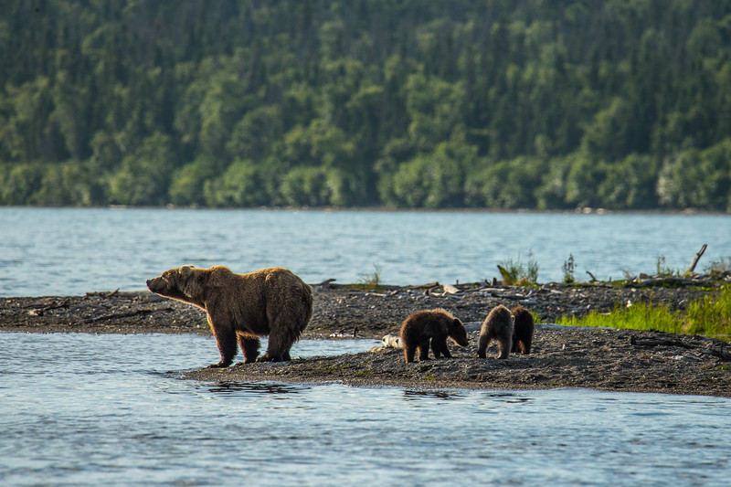 Katmai Bears-14.jpg