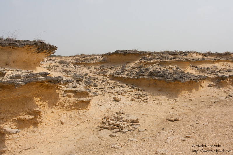 Landscapes of Kutch - Kutch, Gujrat, India