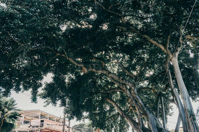 Hawaii20-702.jpg