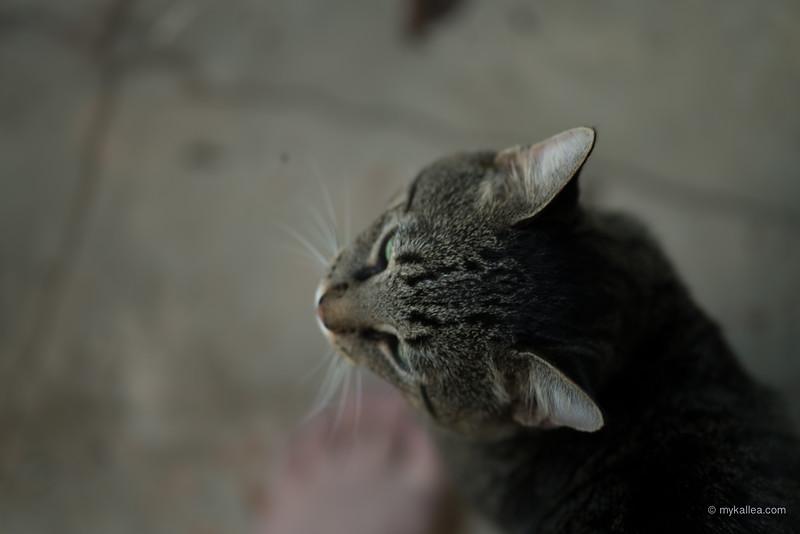 Pets-117.jpg