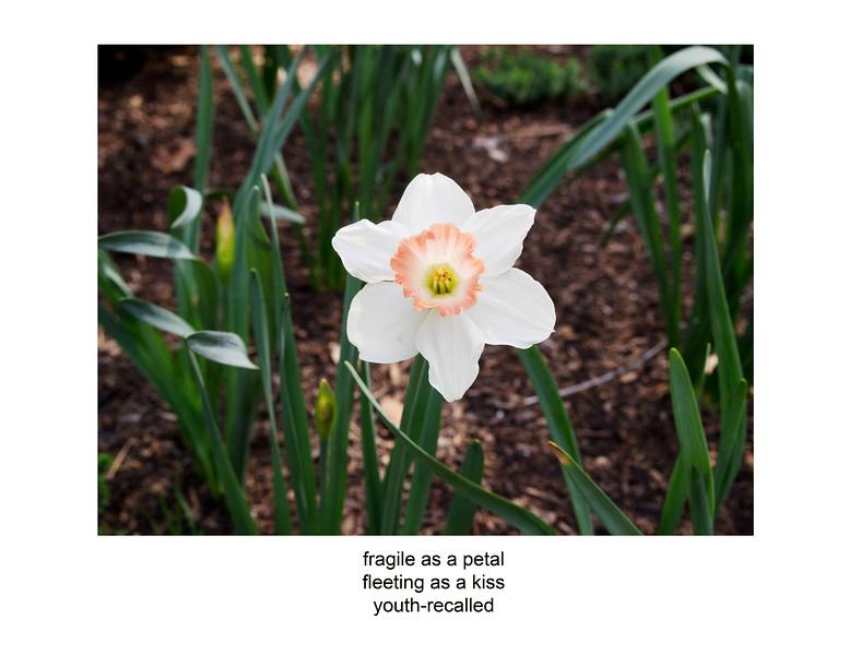 2011-03-12 white flower poem P3120038.jpg