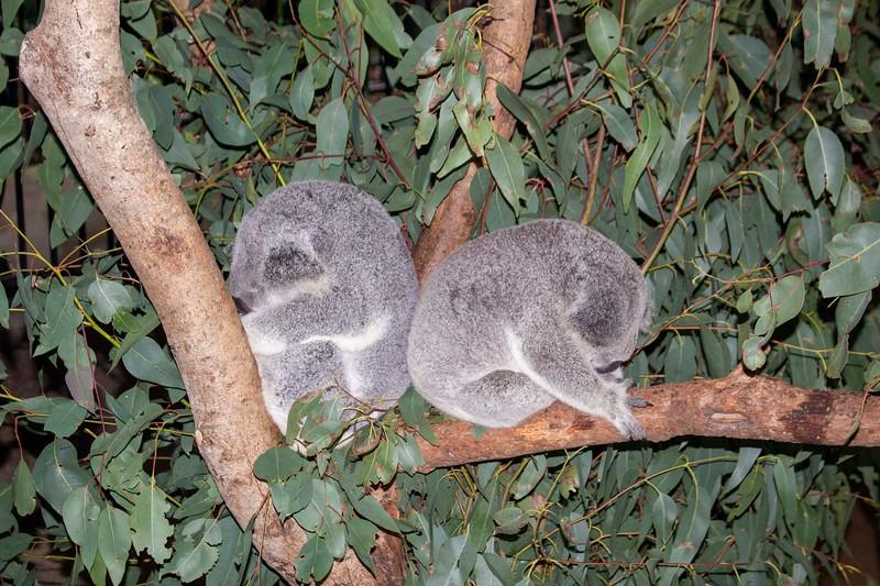Australia_225.jpg