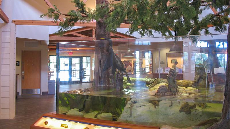 Aquarium in nature center