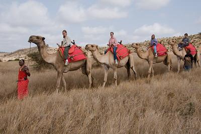 Horseback and Camel Rides