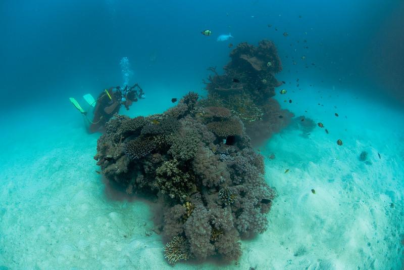 Me, Camera, and Coral Garden, Great Barrire Reef - Cairns, Queensland, Australia