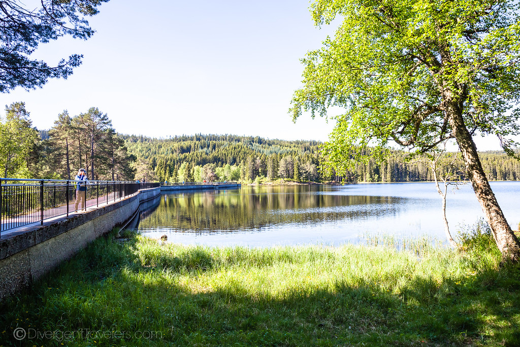 things to do in Trondheim Norway - Bymarka Nature Reserve - Lina Stock