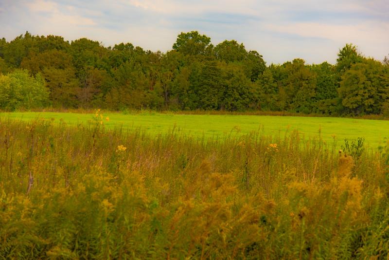 Prairie  45