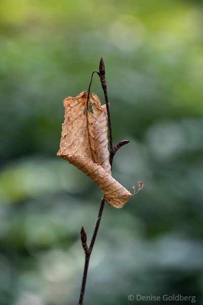 an early sign of autumn