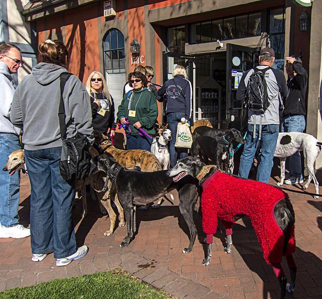 greyhound weekend Solvang.jpg