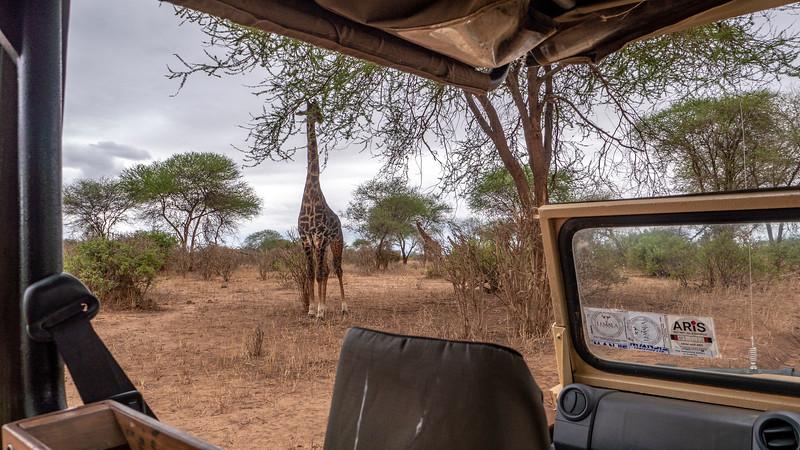 Tanzania-Tarangire-National-Park-Safari-Giraffe-01.jpg