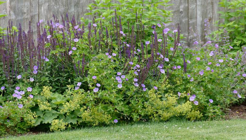 Backyard Garden (1).jpg