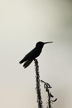 Palm Springs Birds 07.17
