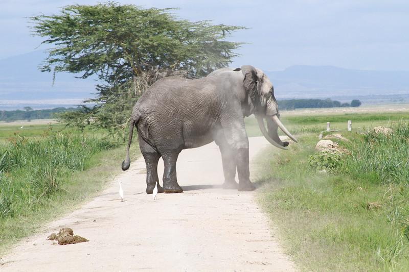 Kenya 2019 #2 877.JPG