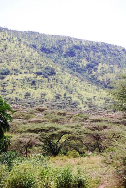 Serengeti (65).JPG