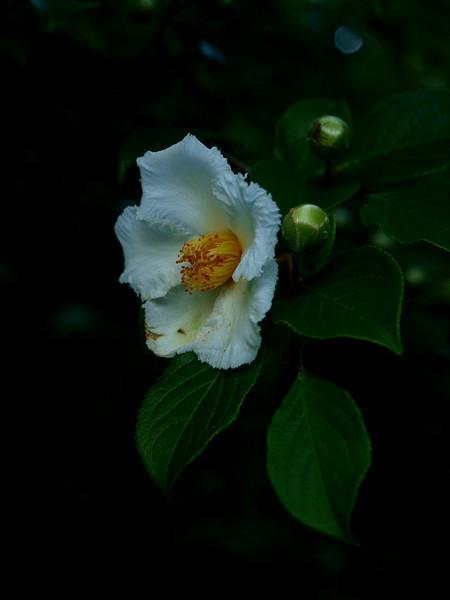 sayen bloom.jpg