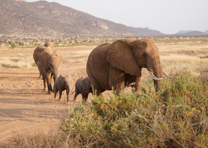 safari-2018-20.jpg
