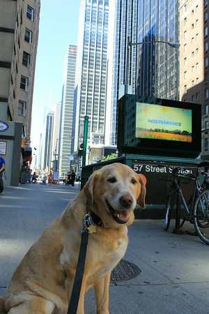 Dog Days in NYC