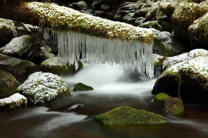 Cripple Creek, Clackamas Wilderness Area