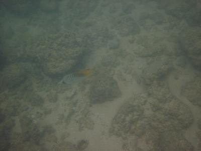 Kauai Maui Underwater