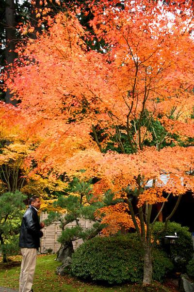 Portland Japanese Garden  11-11-11  3557.jpg