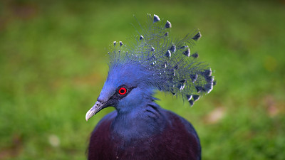 MALAYSIA, Kuala Lumpur bird park 2018.