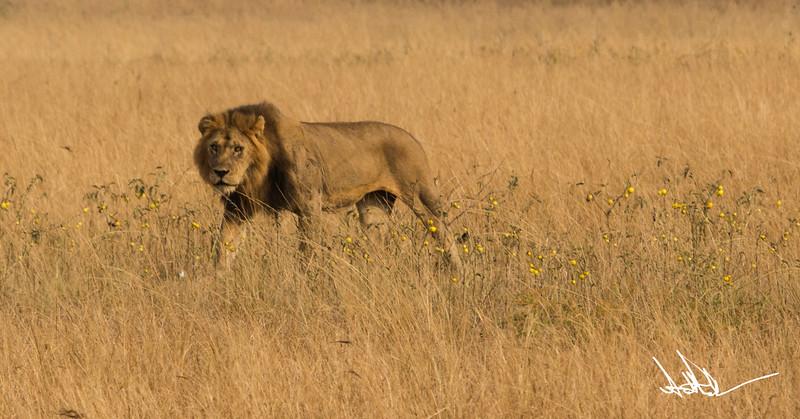 Lions Queen Elizabeth - Ssig-5.jpg
