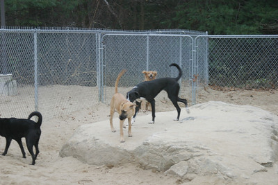 All Dogs Gym 11-07-2012