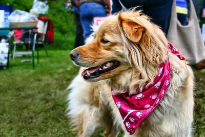 The Durham CT, First Annual Pet Fair.