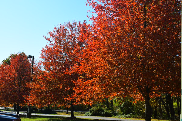 FDR Fall Leaves