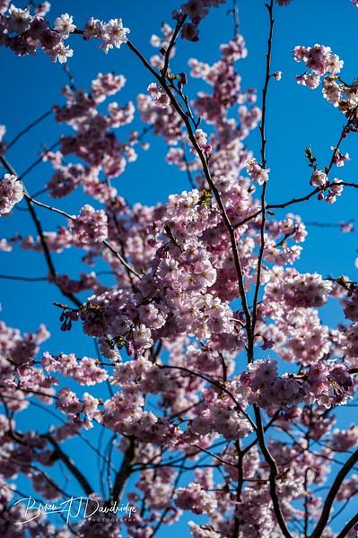 Spring blossom-2104.jpg