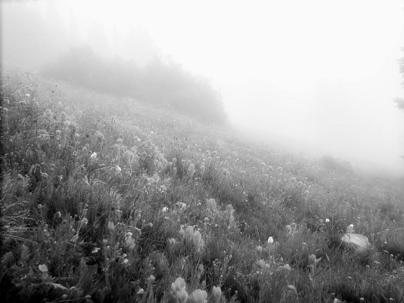 amh FLOWERS (1310).jpg