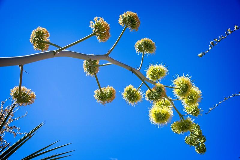Phoenix Desert Botanical Garden