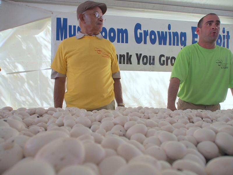 Mushroom Festival.jpg