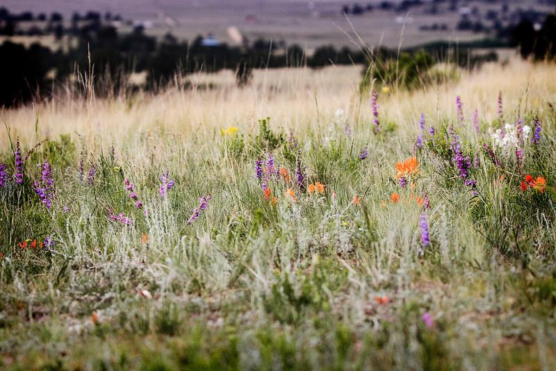 Wildflowersb.jpg