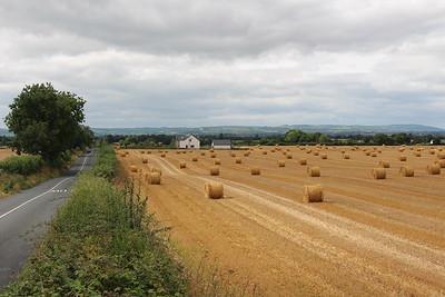 County Kildare, Ireland (August 2016)