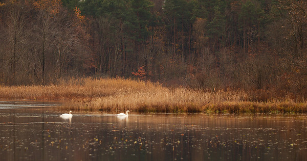 Herrick Fen Fall Images - Nov 8 2008