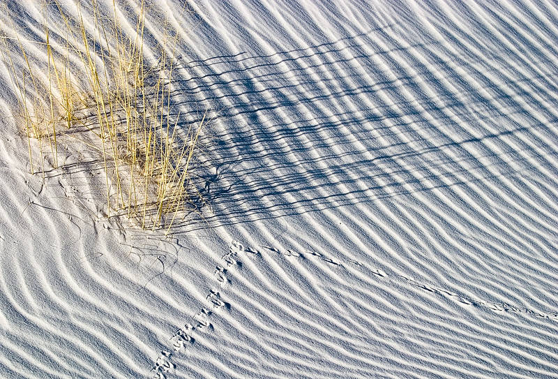 'Grasses and White Sands' - White Sands National Monument, New Mexico