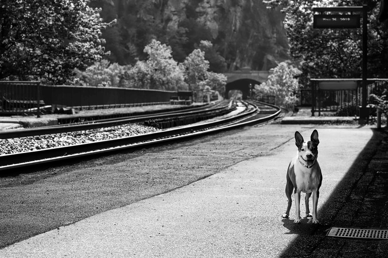 Station Pup